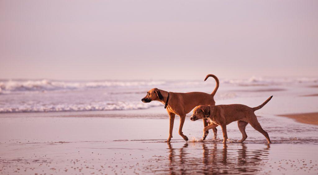 two-dog-beach