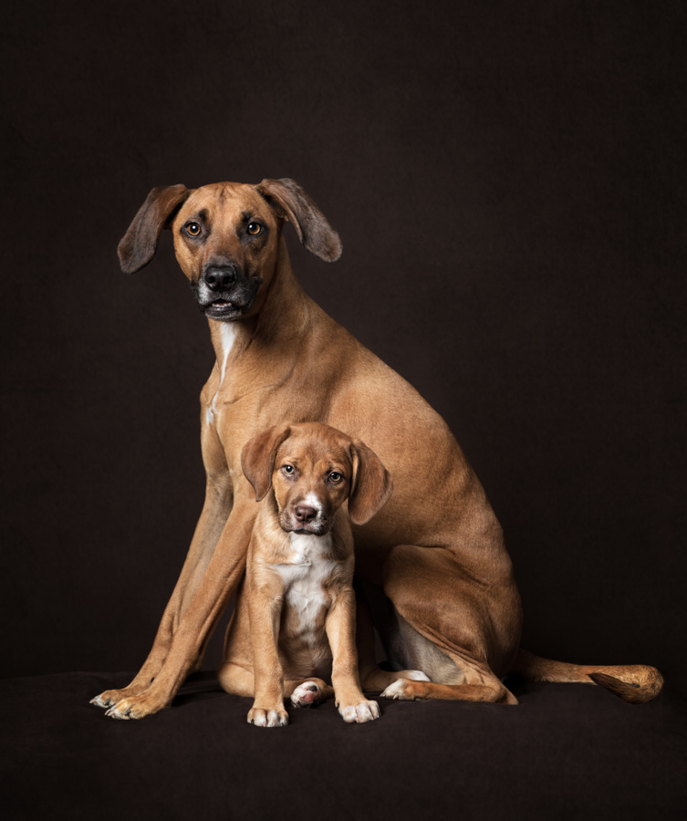 Artful Paws Photography | Professional Pet Photography