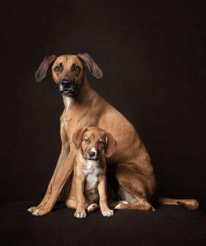dog-photography-dc-va-studio-puppy-safe-3-2-c20.jpg