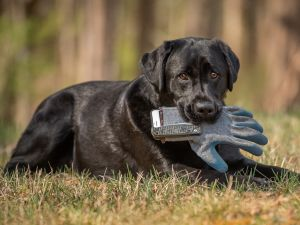 outdoor-dog-photography=black-lab-dc-pet-photography-3686.jpg