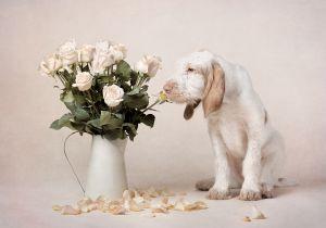 studio-dog-photography-puppy-artful-paws-.jpg