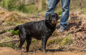 dc-dog-photographer-outdoor-black-lab-mud-3734.jpg