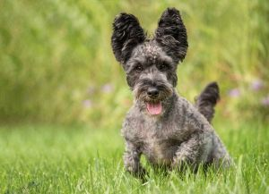 dc-pet-photography-outdoor-scottie-dog-5454.jpg