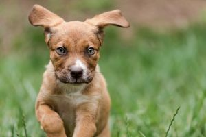 fairfax-dog-photographer-outdoor-pet-photography-puppy-picture-2473-c11.jpg