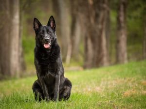 va-md-dc-pet-photographer-outdoor-black-dog-4023.jpg