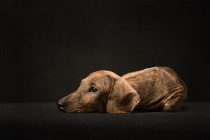 mclean-va-dog-photographer-puppy-studio-4581.jpg