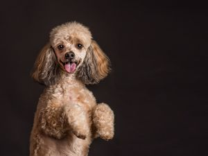 va-pet-photographer-studio-dog-photography-.jpg