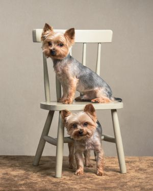 va-pet-photographer-studio-dog-photography-3790.jpg