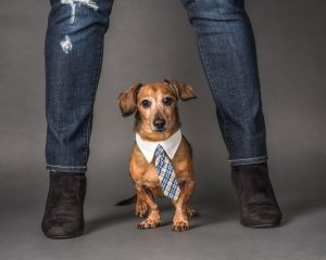 va-pet-photographer-studio-dog-dacshund-5445.jpg